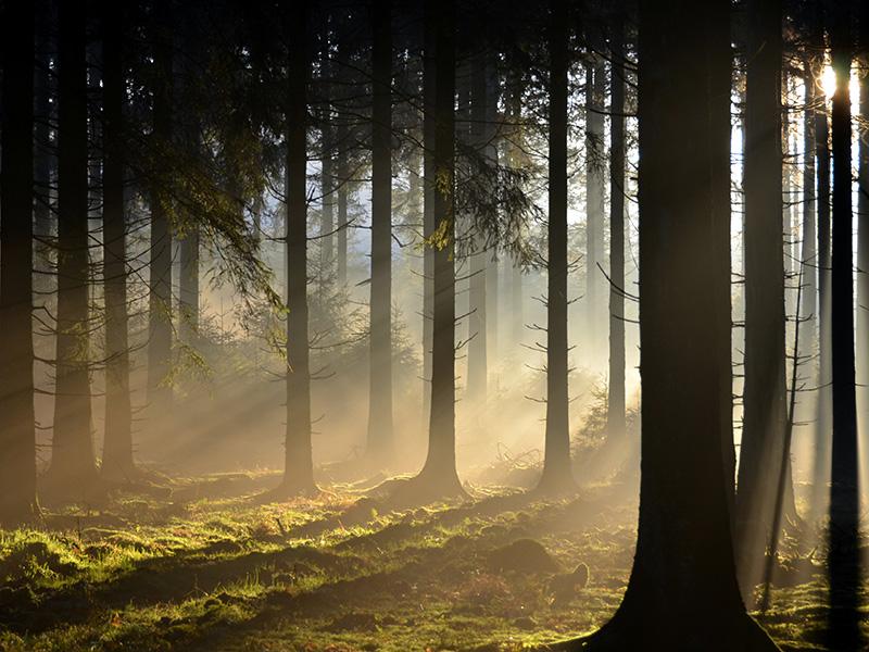 Bestemming Ardennen