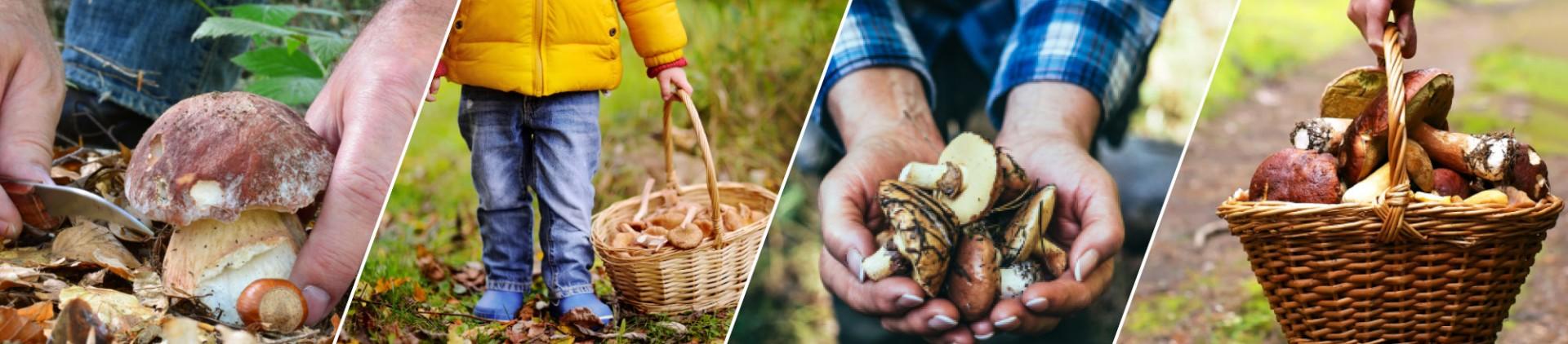 Balades champignons en province de Liège