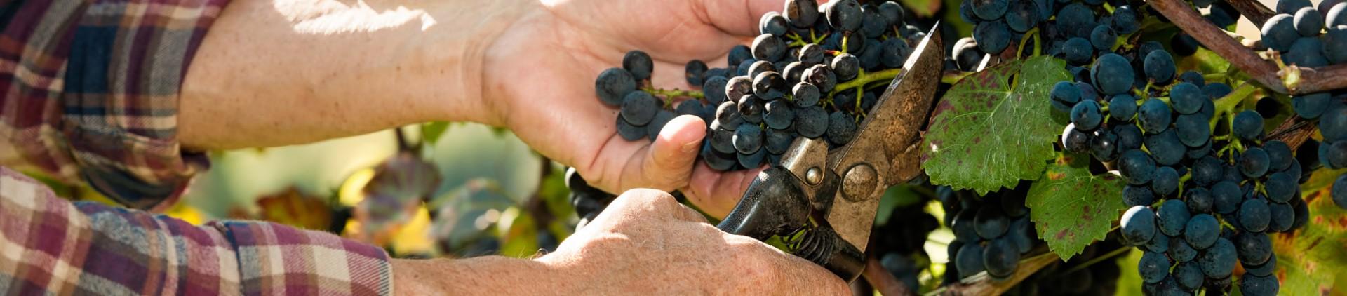 Les producteurs - Route du vin en province de Liège