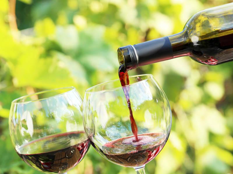 De wijnroute