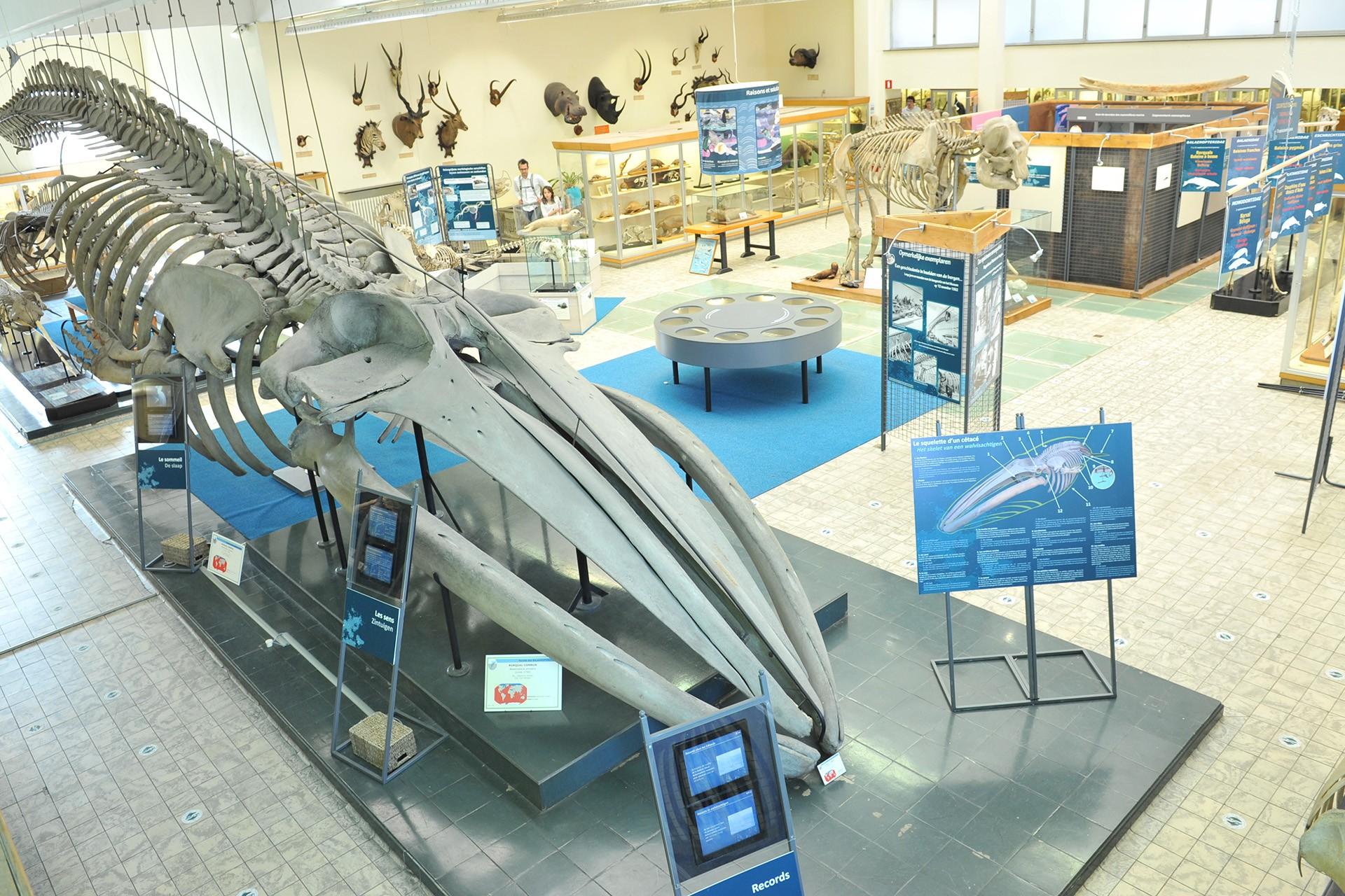 Aquarium-Museum Liège