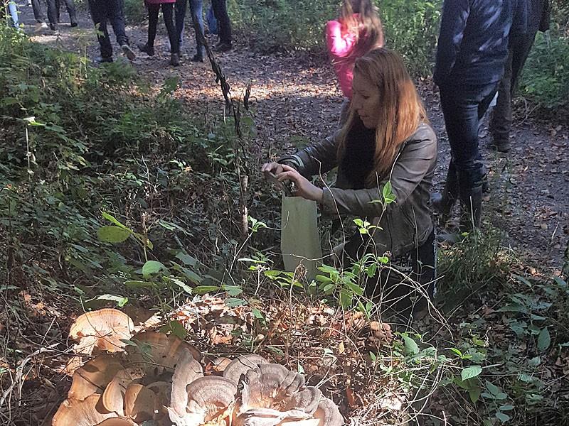 Balade à la découverte des champignons - Ivoz-Ramet