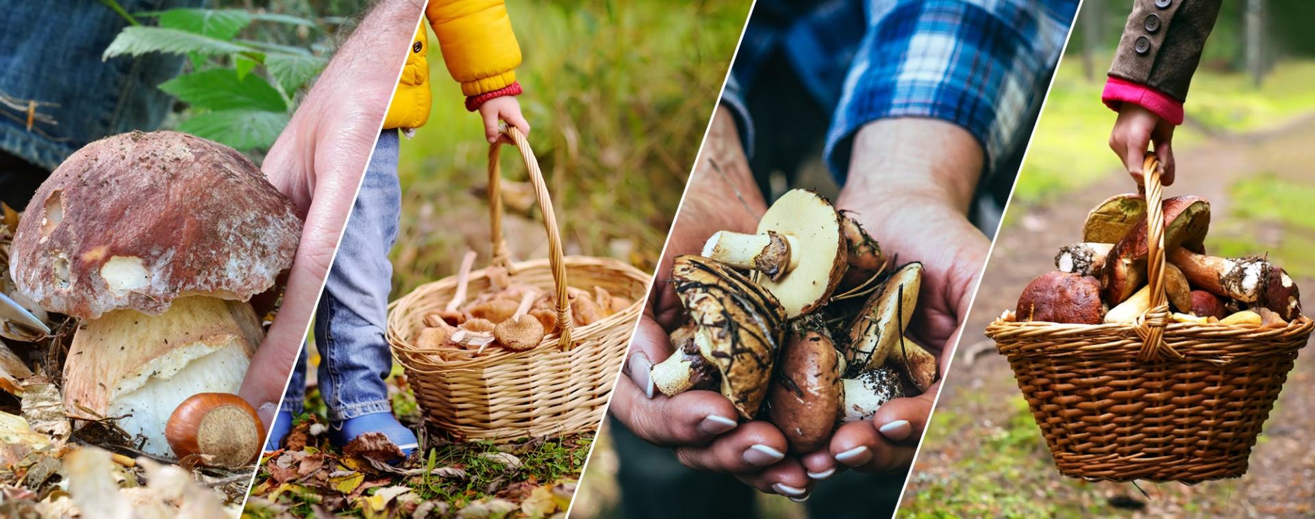Balades champignons 2018 en province de Liège | © Getty Images