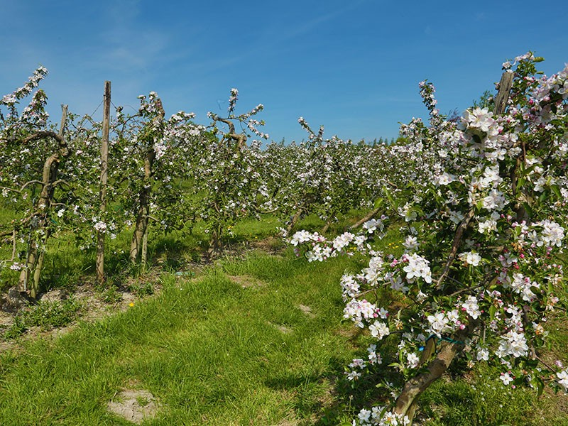 Balades en boucle - Balade de la Val Dieu Brune - Vergers en fleurs