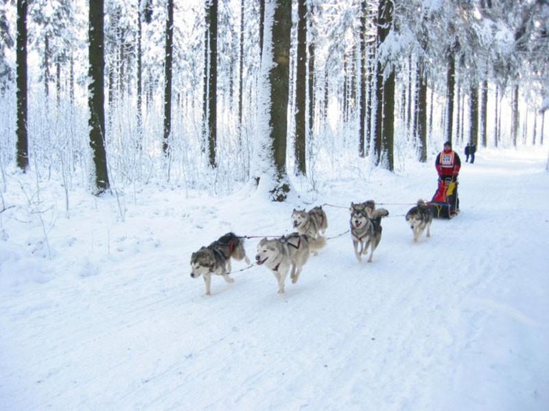 Course internationale de chiens de traineau - Saint-Vith
