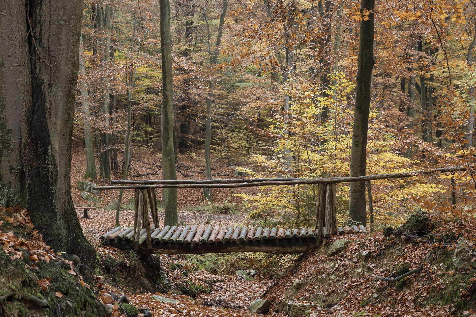 Forêt Spadoise