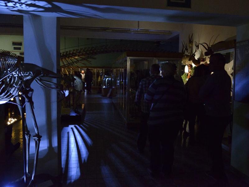 Les Nuits au Muséum à l'Aquarium-Muséum de Liège