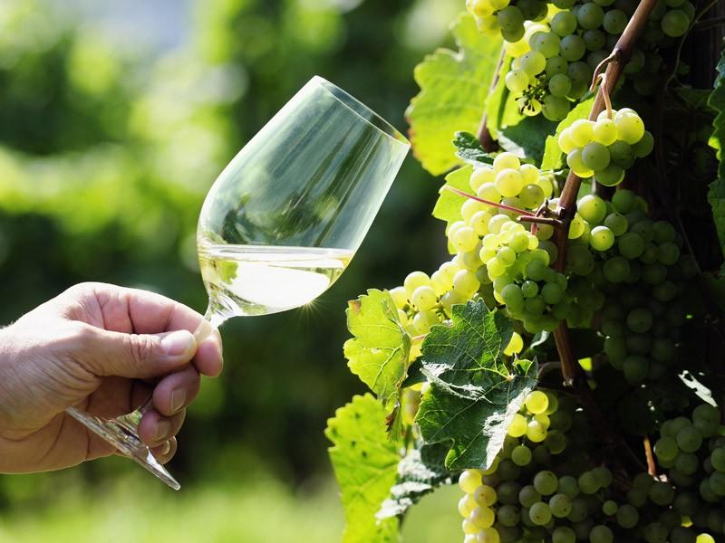 TriVinum - Foire du vin et de la gastronomie