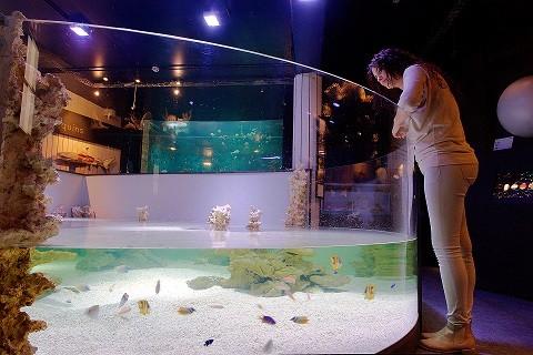 © Jacques Ninane - Aquarium-Muséum