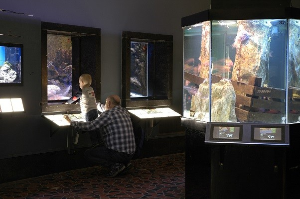 Aquarium-Museum © FTPL Mfred DODET