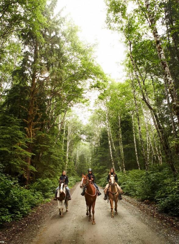 Balade à cheval dans les bois