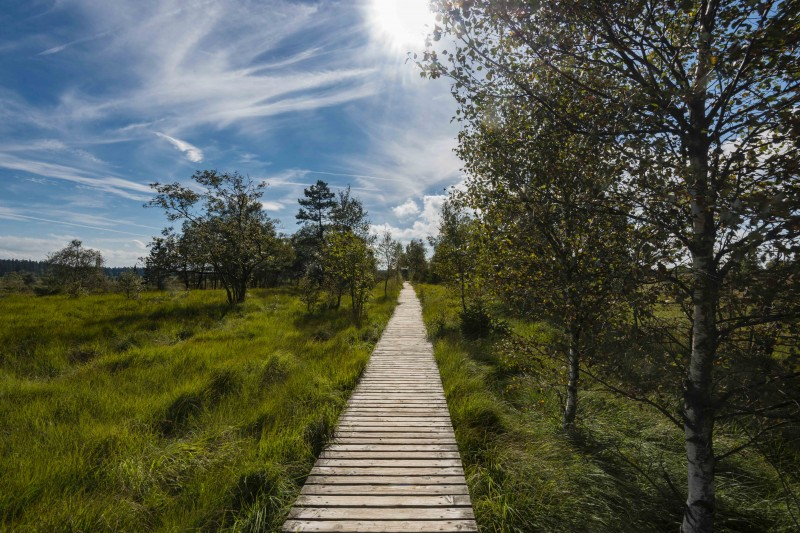 Les Hautes-Fagnes, lieu idyllique pour les promeneurs