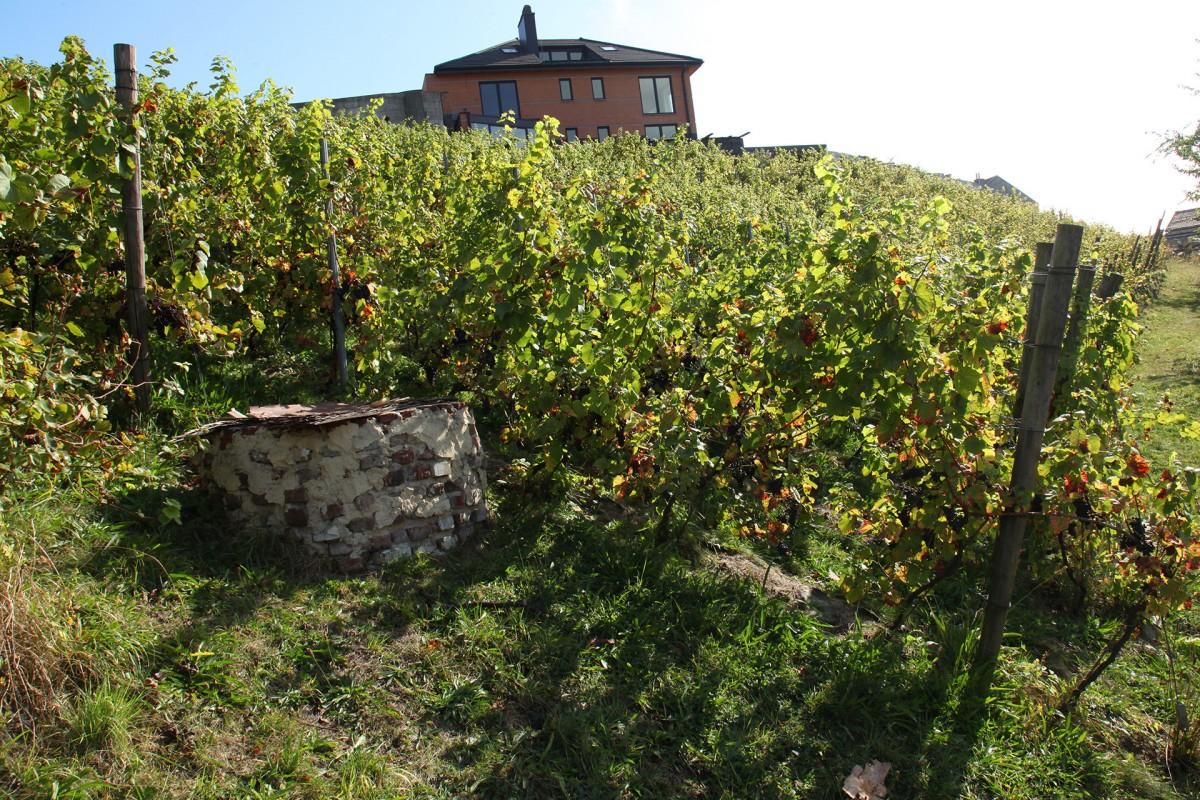 Vignes-puits-coteaux-la-legia
