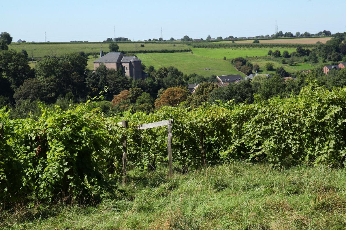 Vignes-et-chateau-domaine-dalhem