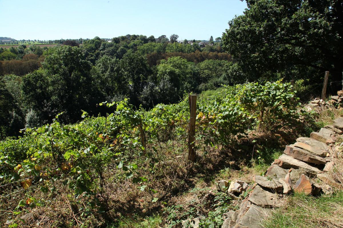 Vignes-paysage-domaine-chateau-dalhem