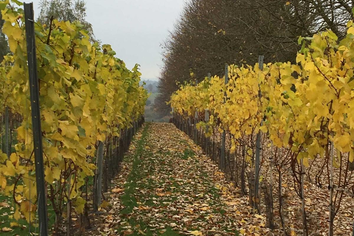 Domaine Montulet - Dalhem - Vignoble