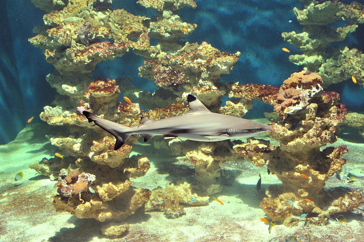 Aquarium-muséum de Liège requin © Aquarium-muséum de Liège