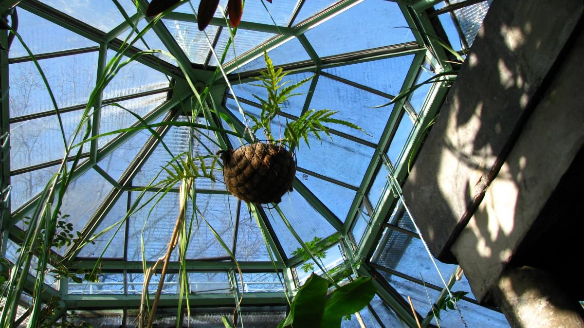 Serres jardin botanique de Liège