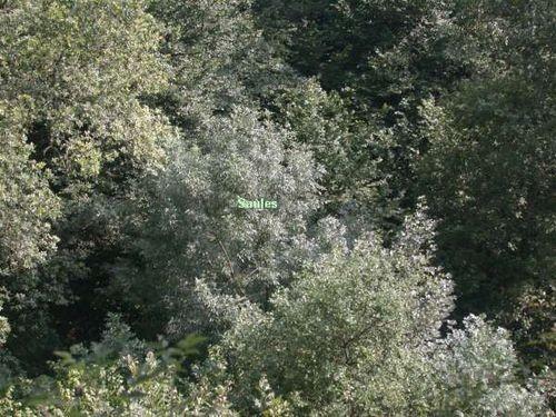 Reserve forestire Grande Va Ferrière 2