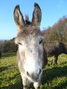 Balade à dos d'ânes ou poneys en autonomie2