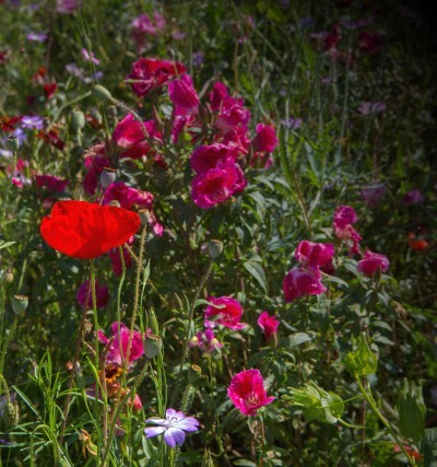Fleur rognac