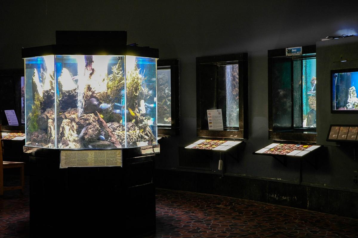 Aquarium-Muséum - Liège - Aquariums