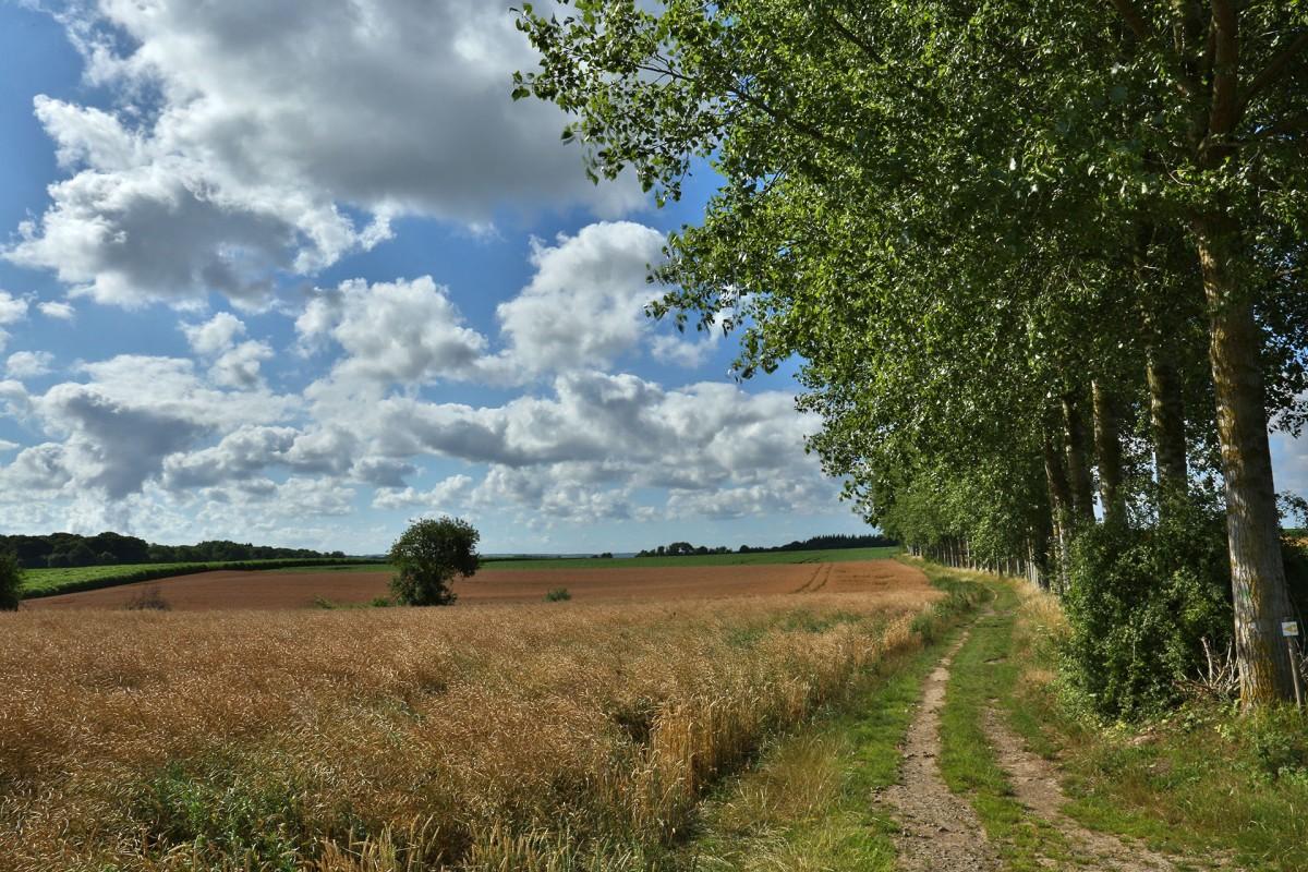 Parc Naturel Vallée Burdinale et Mehaigne - Champ et chemin