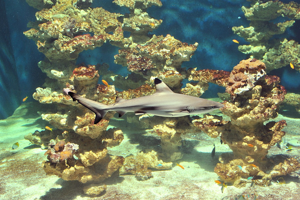 Aquarium Museum - Liège - Requin