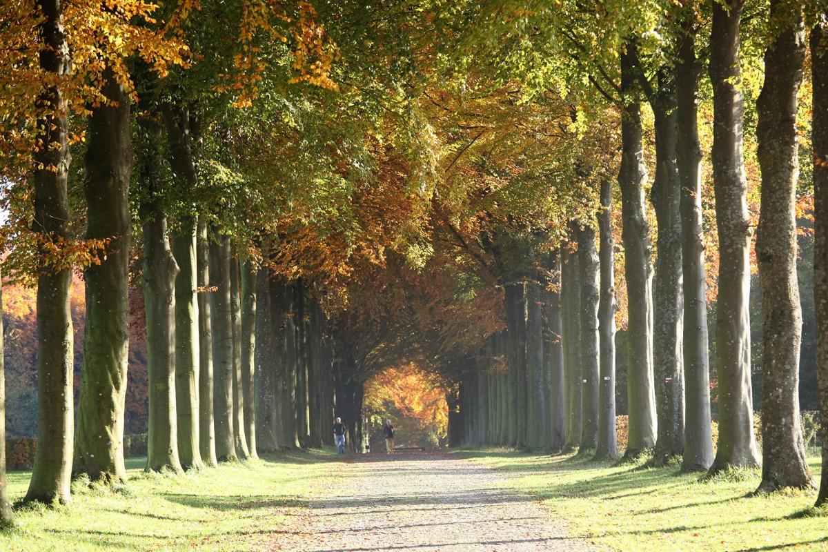 Allée du Parc - Petit-Modave