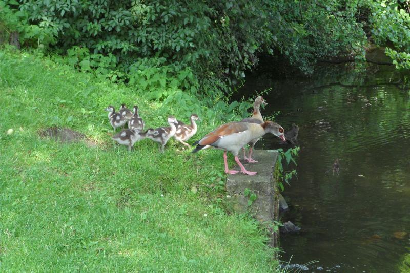 Parc oie domaine de Wégimont copy Province de Liège