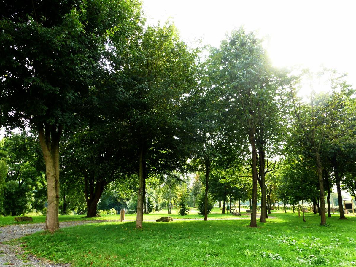 Arboretum de Coingsoux_©RSIL (1)