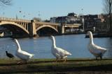 Balades en boucle - La balade des poiriers - Visé - Bord de Meuse