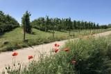 Balades en boucle - La Basse-Meuse - Pays de Herve - Fleurs et vergers