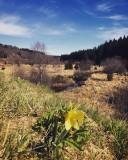 Balades en boucle - La petite boucle des Hautes Fagnes - Paysages de Fagnes