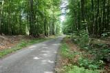 Fietsen, Treinen & Landschappen - De Hoge Venen - Weg - Bos