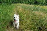 OT Flémalle - Randonnée canine