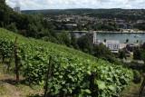 Clos Bois Marie - Huy - Vignes et vue sur Tihange
