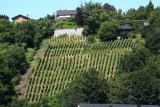 Clos Bois Marie - Huy - Vignoble