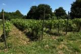 Le Clos du Germi - Amay - Vignes