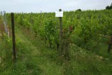 Domaine Celiandre - Flémalle - Pinot gris