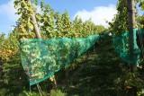 Coteaux de la Légia - Ans - Vignes