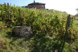 Coteaux de la Légia - Ans - Vignes et puits