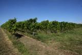 Vignoble-vin-de-liege