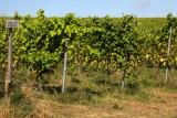 Vignes-domaine-vin-de-liege