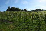 Septem Triones Galler - Chaudfontaine - Vignoble