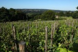 Vignoble-paysage-septem-triones