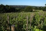Septem Triones Galler - Chaudfontaine - Vignoble paysage