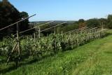 Septem Triones Galler - Chaudfontaine - Vignes