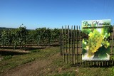 Vignoble-les-marnieres