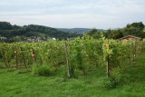 Clos d'Antheit - Wanze - Vignes